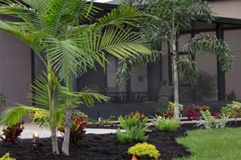 Areca Palm in the backyard at a home in %%tragetarea3%%, FL.