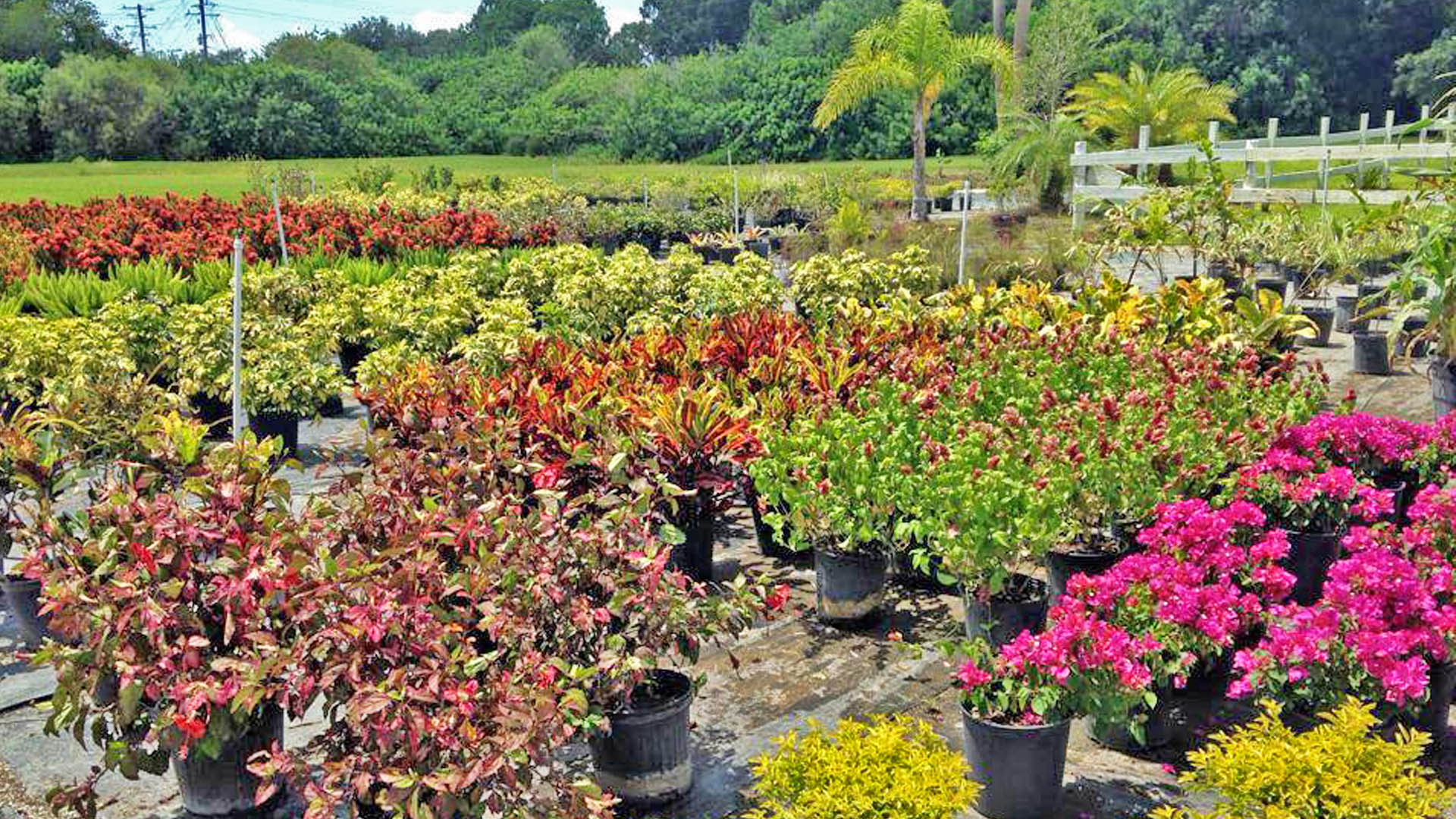 Photo of Three Seasons plant nursery in Palmetto, FL.
