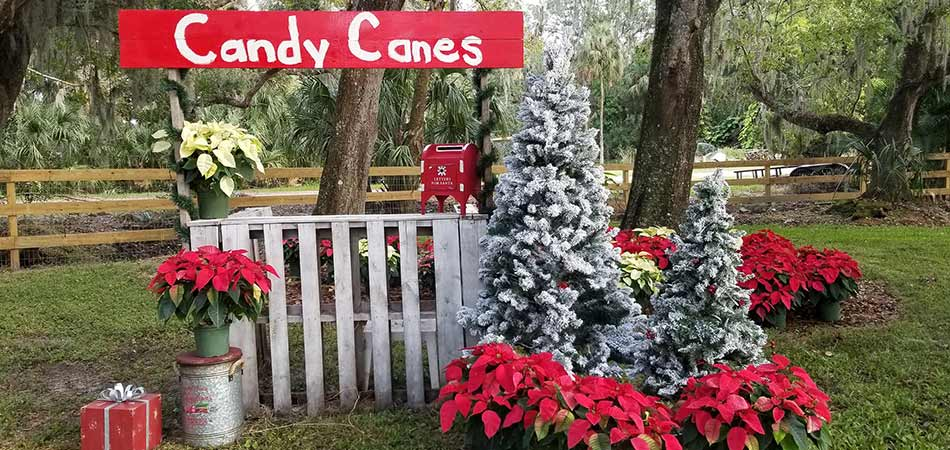 Holiday display and candy canes banner for photos in Palmetto, FL.