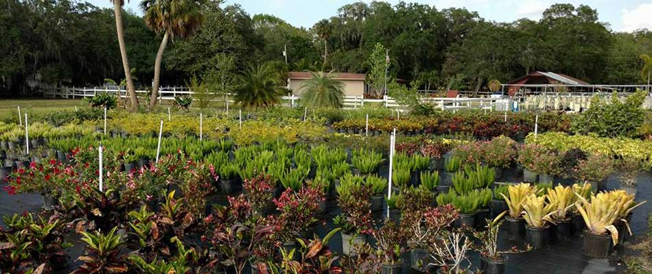 The selection of plants at our Palmetto location outshines big box stores.