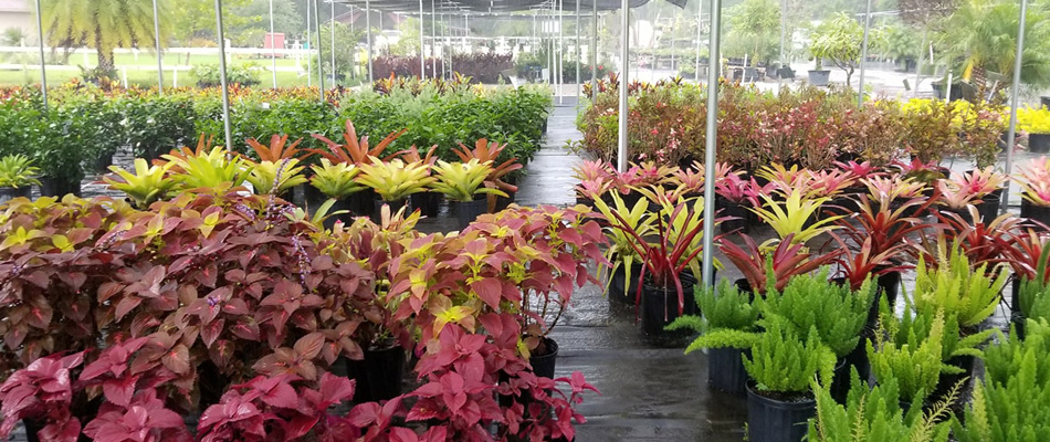 Why You Should Choose a Local Plant Nursery