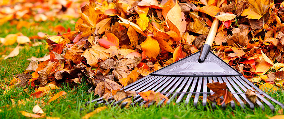 Why Fall Leaf Removal Is Important for Your Lawn
