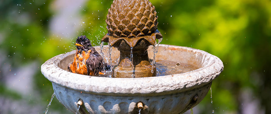 A bird enjoying a backyard fountain in Parrish.