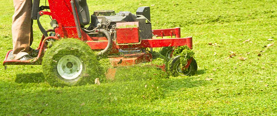 Why Mowing Wet Grass Is Not a Good Idea