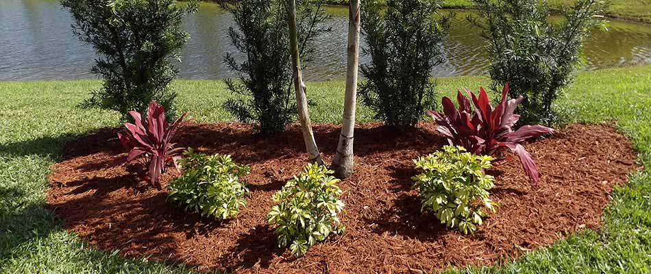 Red mulch installation and plantings in a landscape bed in Bradenton Beach, FL.