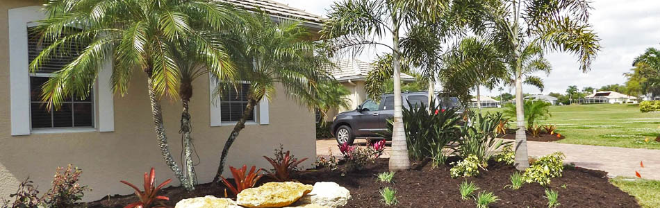 Palm tree landscaping in Palmetto, FL .