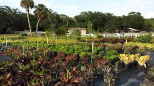 Three Seasons Plant Nursery in Palmetto, FL