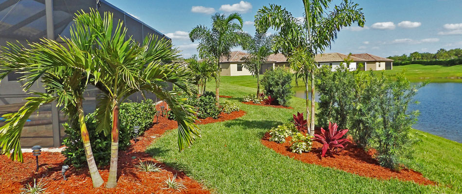 The 5 Most Popular Palm Trees in Bradenton, FL