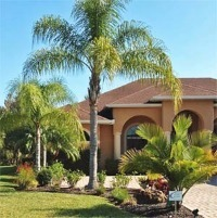 Home in Palmetto with a large queen palm.